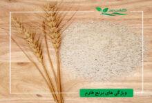 برنج-طارم-ایرانی. فریدونکنارjpg