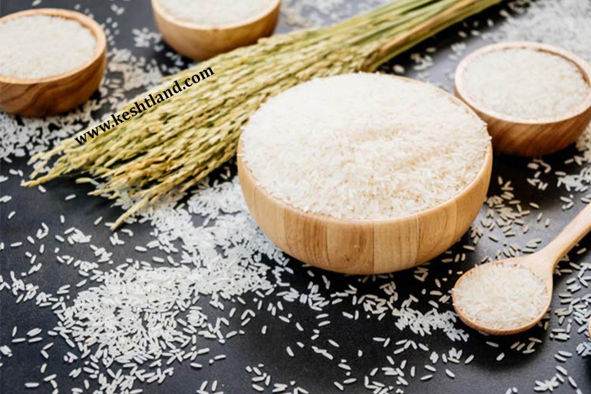 چطور برنج کهنه را از برنج تازه تشخیص دهیم؟