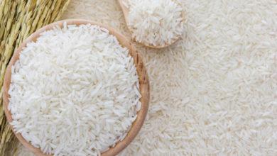 فاوت-برنج-کشت-اول-و-برنج-کشت-دوم.