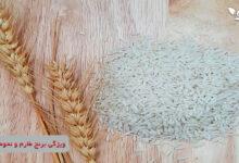 برنج طارم برنجی خوشپخت و خوش عطر است و برازنده سفره هر ایرانی می باشد.