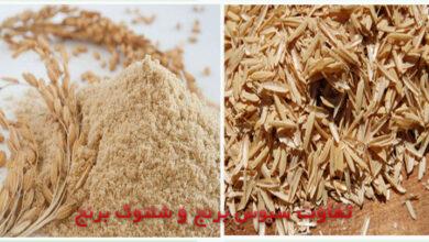 سبوس برنج دارای خواص دارویی و درمانی زیاد است.