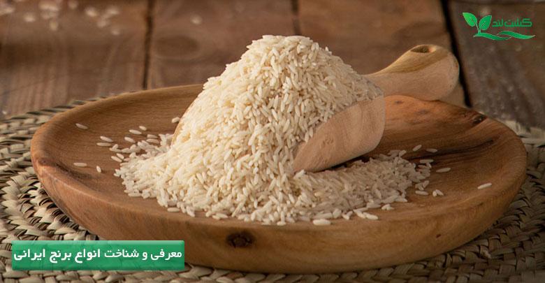 آشنایی و معرفی انواع برنج ایرانی