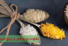 تفاوت برنج فجر و برنج شیرودی. کدام برای خرید مناسب تر است؟