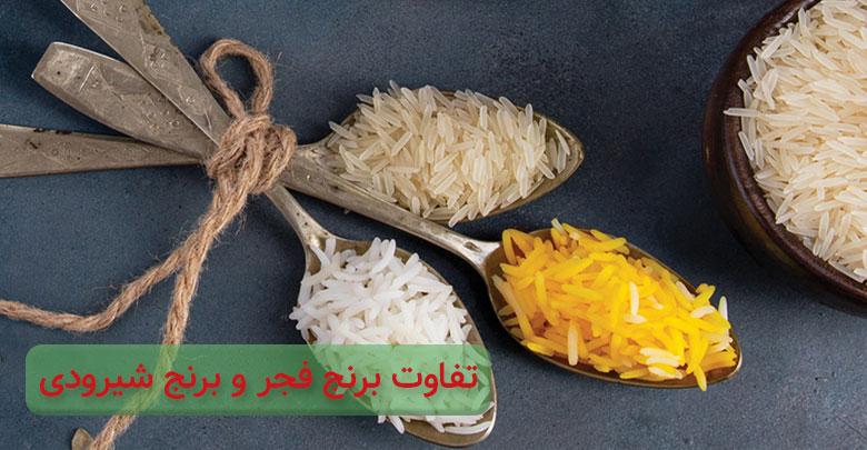 خرید برنج فجر بهتر است یا برنج شیرودی؟