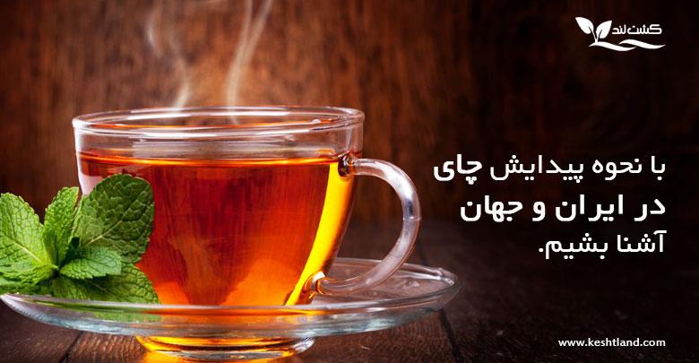 نحوه پیدایش چای در ایران و جهان